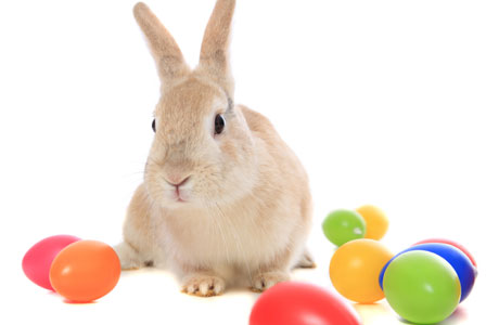 Easter Bunny Images to Print