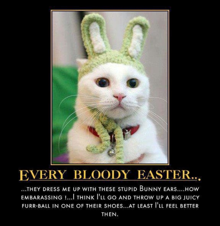 Easter Bunny Jokes Pictures