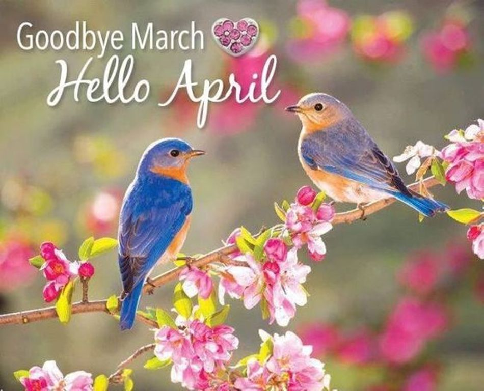 Goodbye March Hello April Pictures