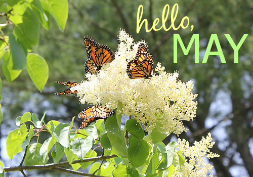 Hello May Images Free