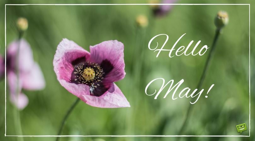 Hello May Quotes with Images