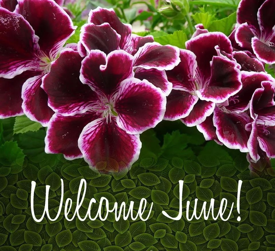 Welcome June Images Floral Background