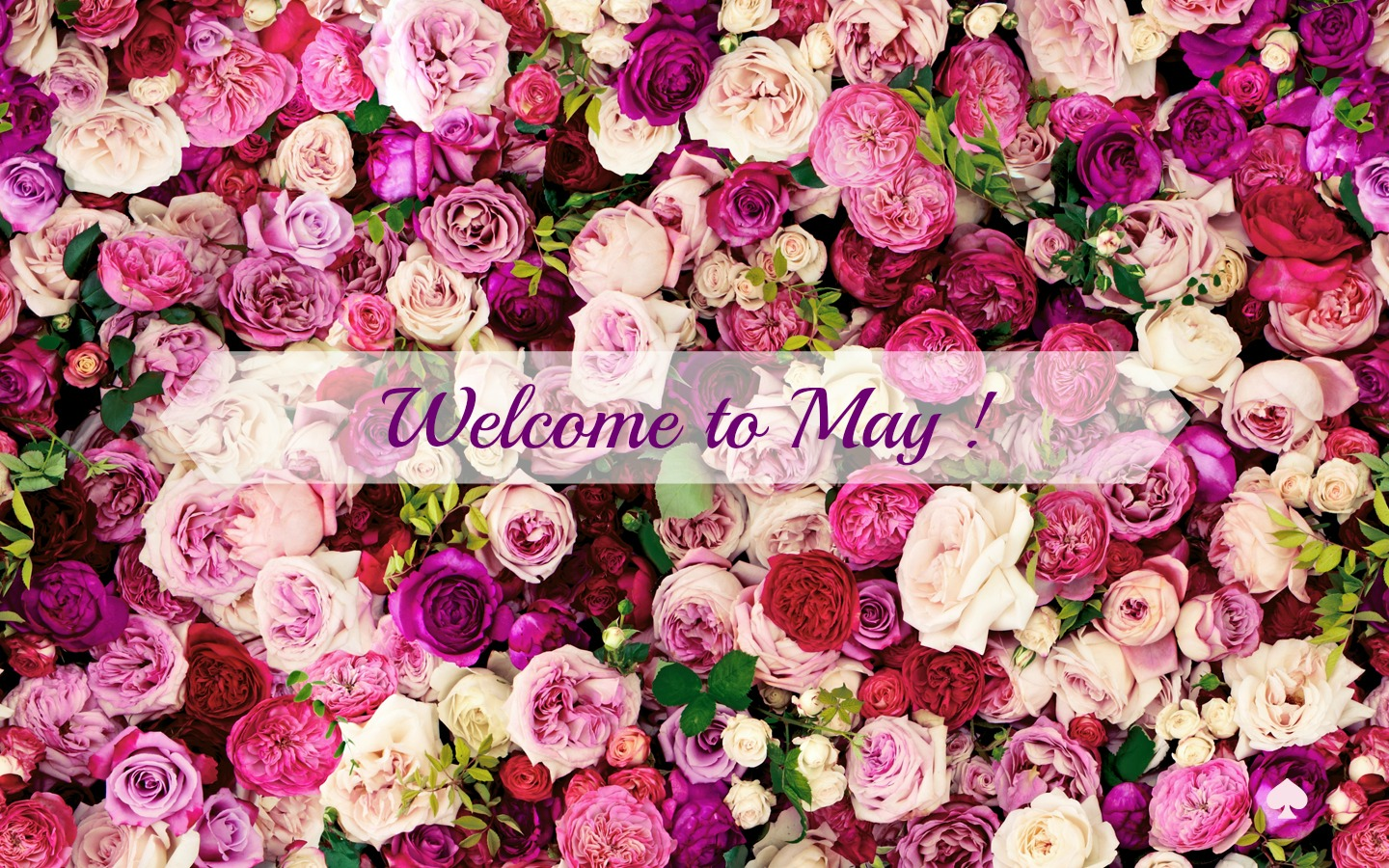 Welcome May Wallpaper