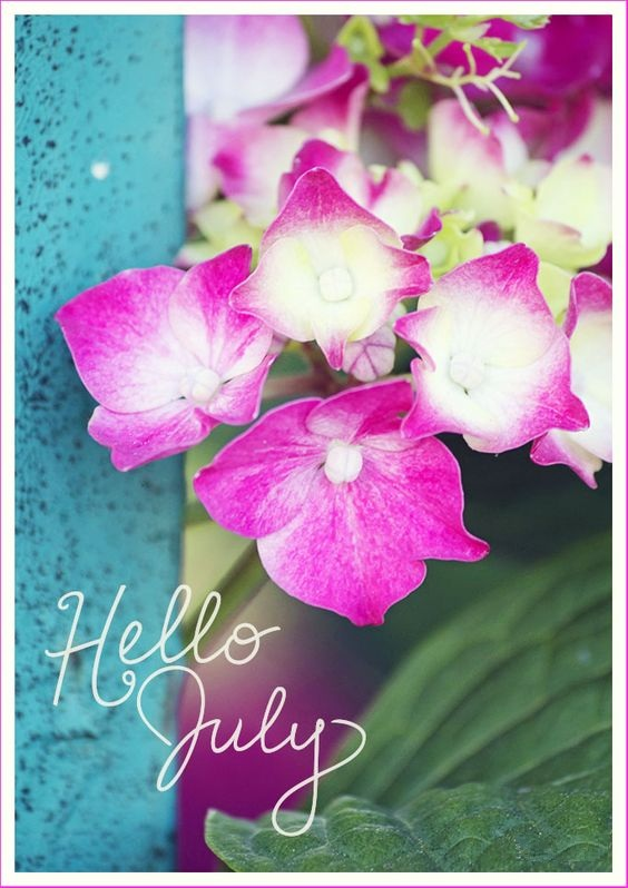 Hello July Floral Images Tumblr