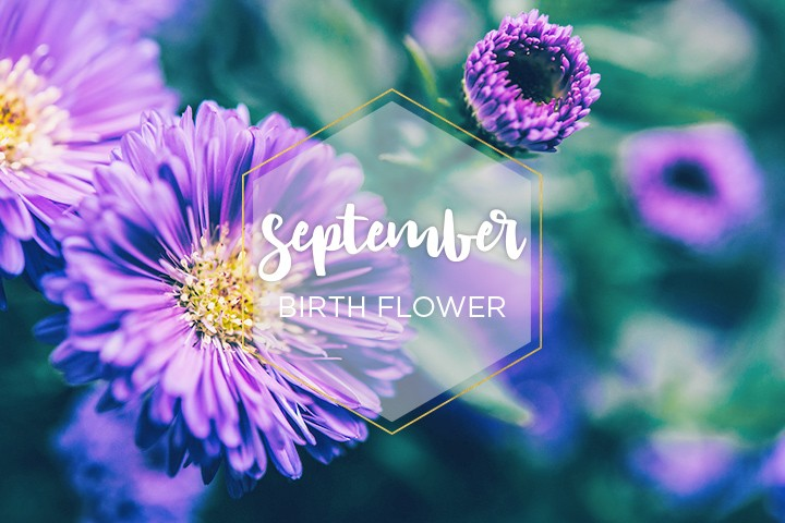 September Birth Flower