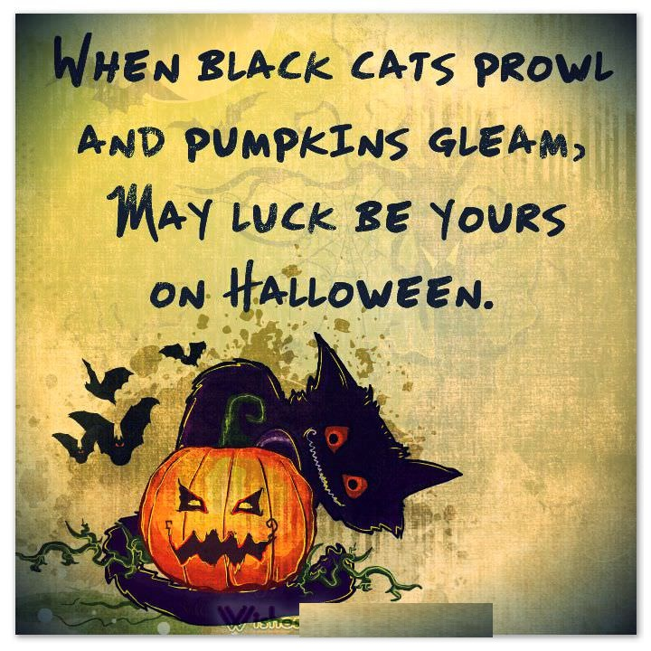 Black Cat Halloween Sayings And Phrases