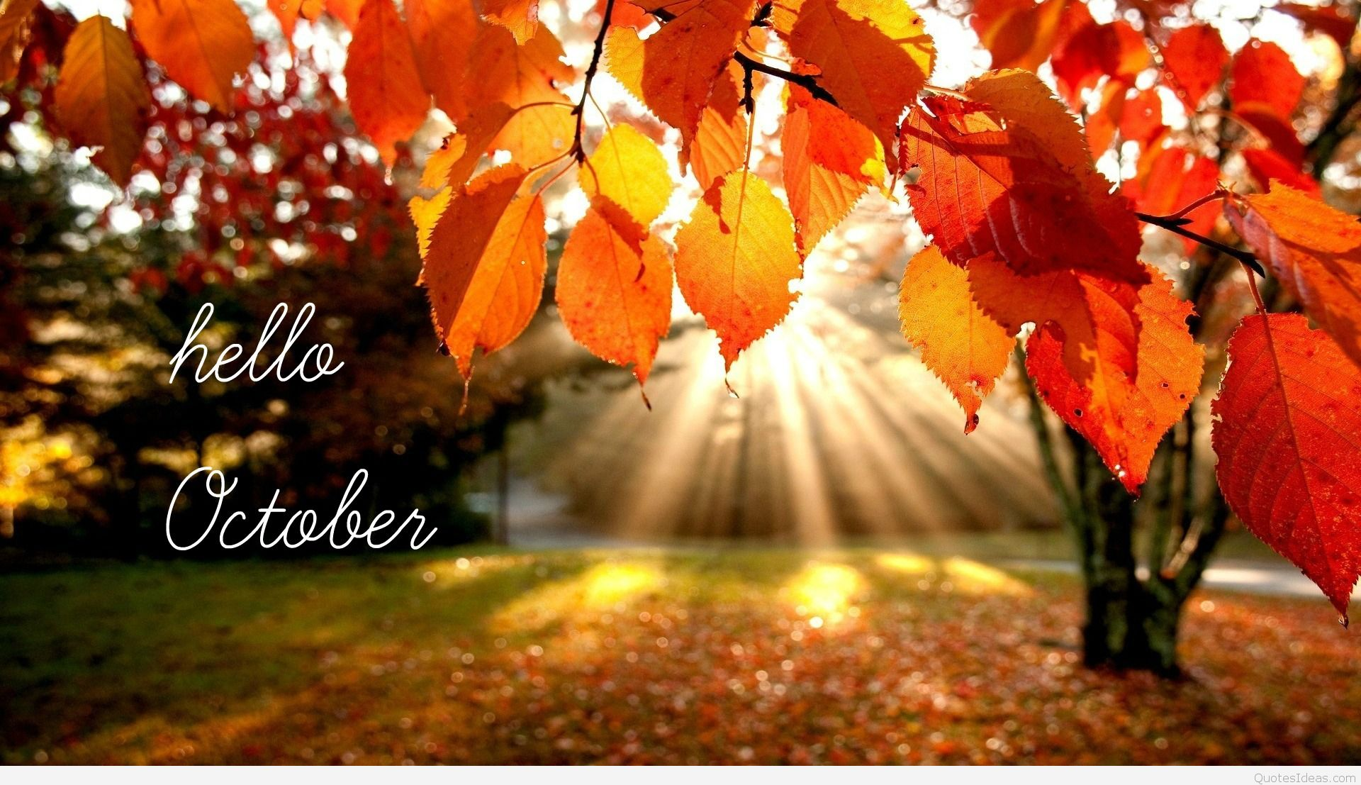 Cover HD Wallpaper Hello October