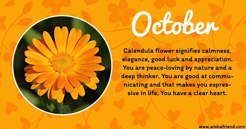 October Birth Flower Calendula Images
