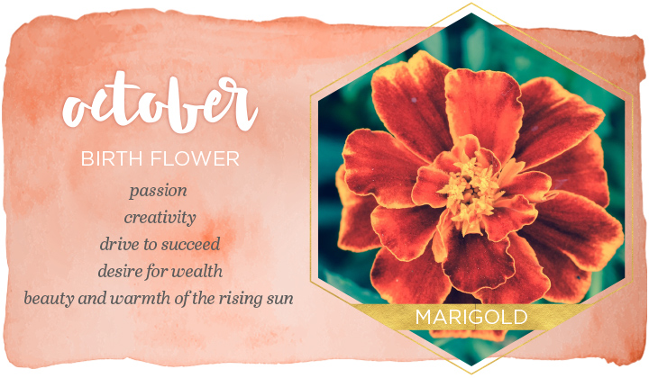 October Birth Flower Meaning Name Facts