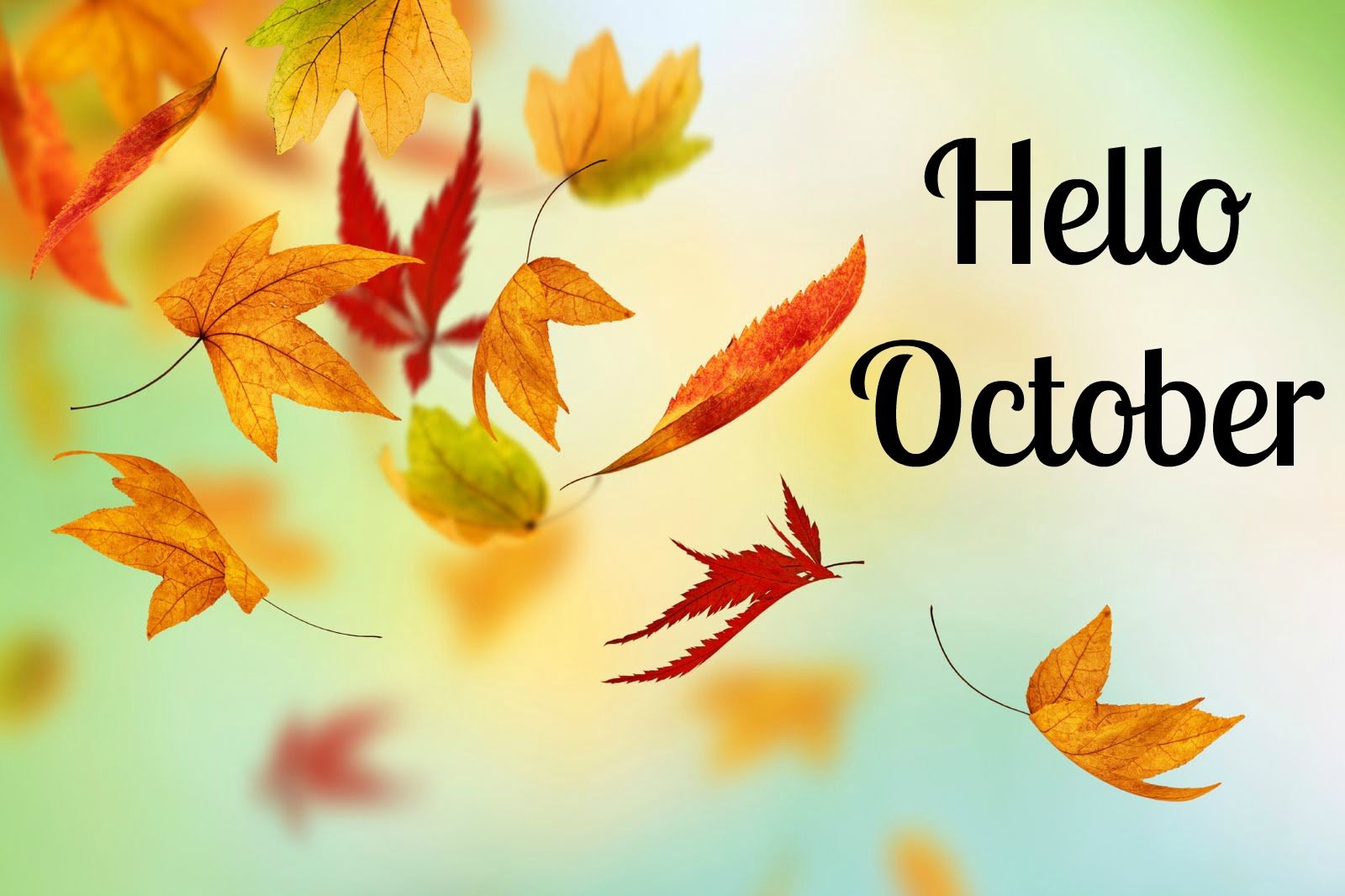 Welcome October HD Wallpapers