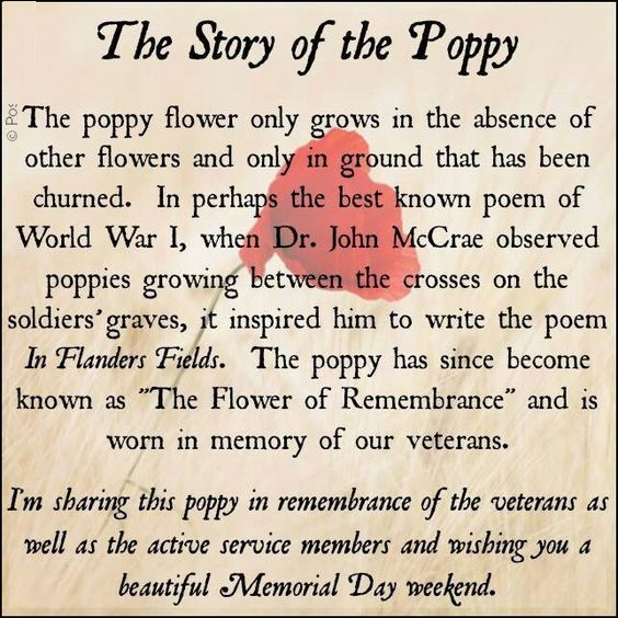 Remembrance Day Sayings Canadian Poppy Flower
