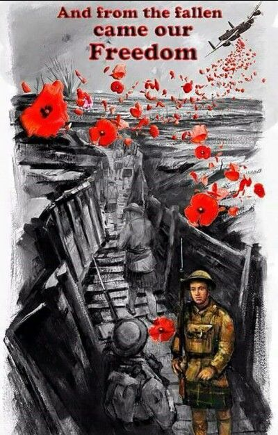 Remembrance Day USA Poppy Pictures