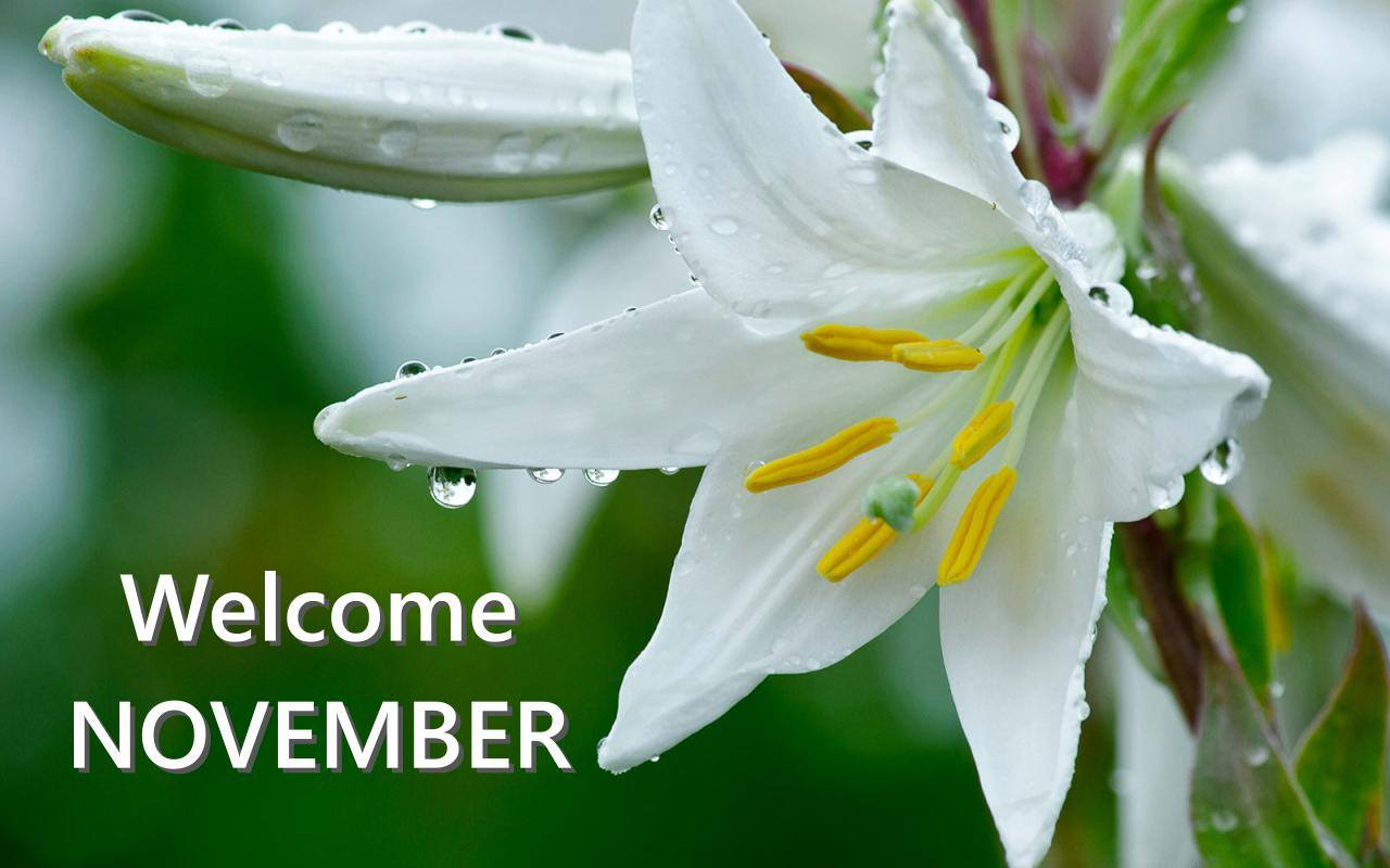 Welcome November Twitter Images