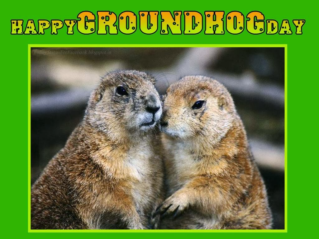 Groundhog Day Greetings Cards