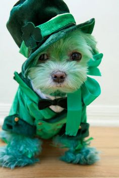 Cute Animal St Patricks Day Pictures
