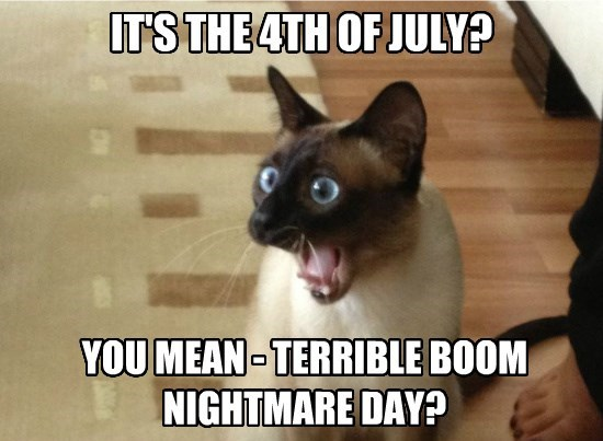 4th of July Memes With Cat
